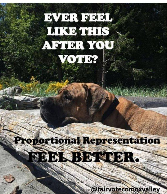 Did you feel sad like this puppy after voting